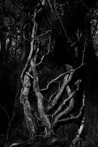 Dans la forêt.......